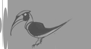 Hornbill01